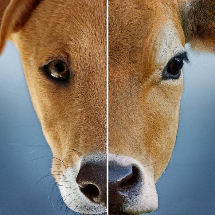 So sánh thịt chó với thịt bò