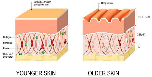 Tại sao cần bổ sung collagen?