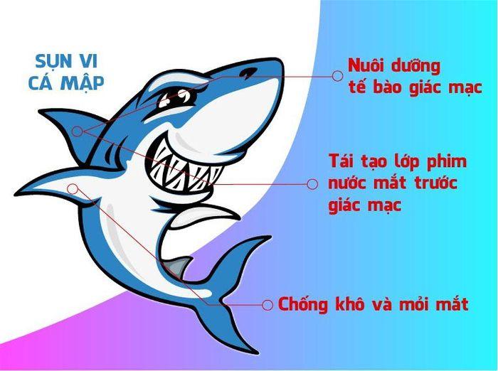 Tác dụng của vi cá mập đối với sức khỏe con người