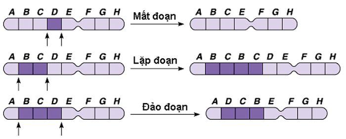 Hội chứng do đột biến cấu trúc nhiễm sắc thể