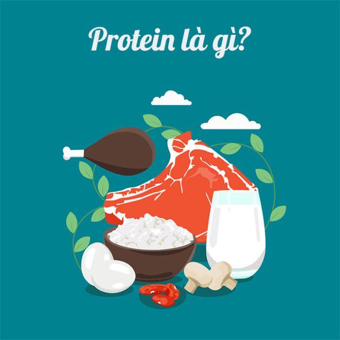 Protein là gì?