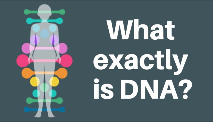 Khái quát chung về DNA